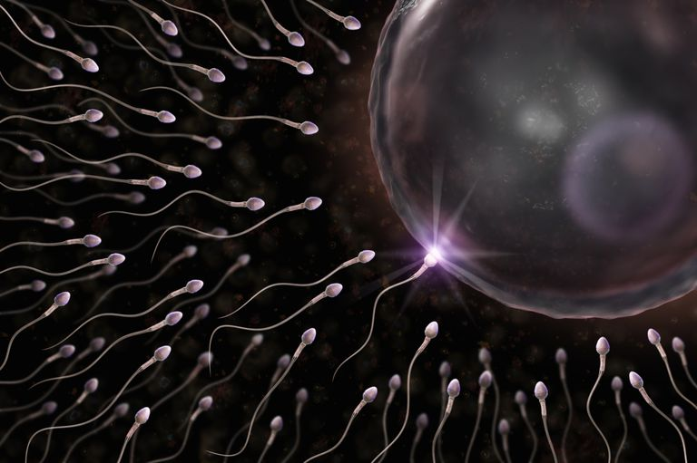 what are male sex cells called